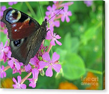A Butterfly On The Pink Flower 2 Canvas Print by Ausra Huntington nee Paulauskaite