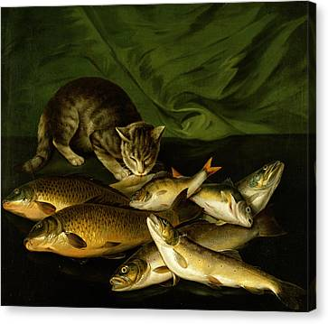 A Cat With Trout Perch And Carp On A Ledge Canvas Print by Stephen Elmer