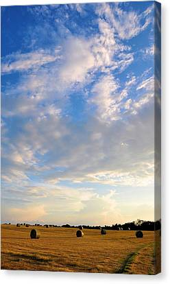 A Cause For Sunshine Canvas Print by Jan Amiss Photography
