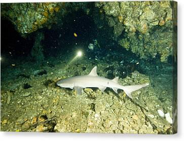 A Diver Exploring A Cavern Encounters Canvas Print by Tim Laman
