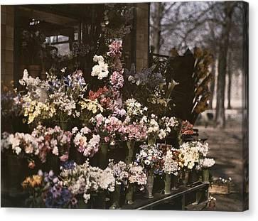 A Diversity Of Flowers Is Set Canvas Print by Maynard Owen Williams