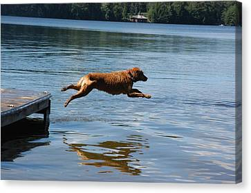 A Dog Jumps Into A Lake Chasing A Ball Canvas Print by Stacy Gold