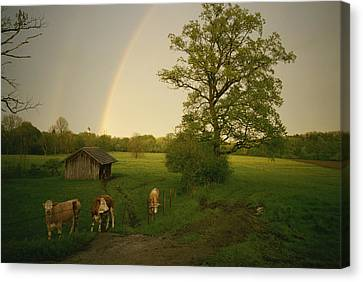 A Double Rainbow Arcs Over A Field Canvas Print by Carsten Peter