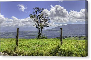 A Fence And A Tree 3552hdr Canvas Print by Sortarivs Arts