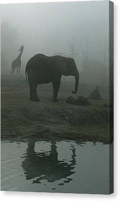 A Giraffe And Elephant Live In The Same Canvas Print by Michael Nichols