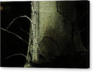 A Life Full Of Shadows Canvas Print by Rebecca Sherman