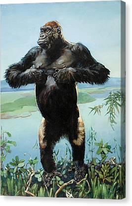 A Male Gorilla Drums His Chest Canvas Print by Elie Cheverlange