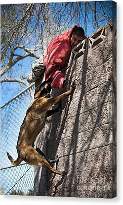 A Military Working Dog Climbs A Wall Canvas Print by Stocktrek Images