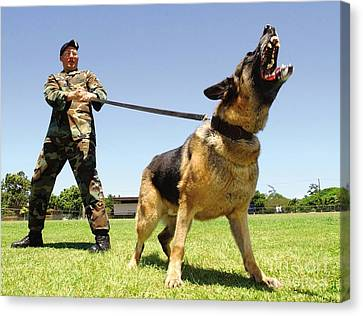 A Military Working Dog Shows His Teeth Canvas Print by Stocktrek Images