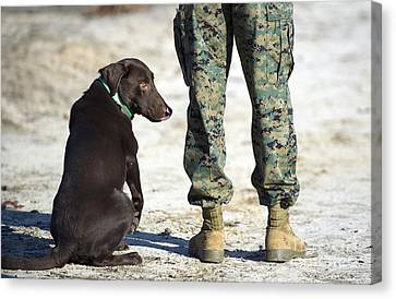 A Military Working Dog Waits Canvas Print by Stocktrek Images