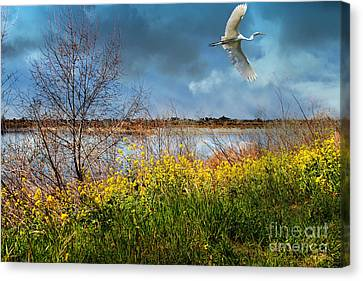 A Moment In Time In The Journey Of The Great White Egret . 7d12643 Canvas Print by Wingsdomain Art and Photography