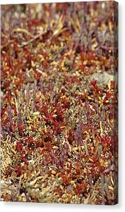 A Myriad Of Bright Red And Orange Canvas Print by Jason Edwards