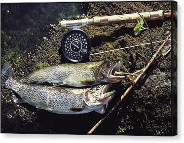 A Pair Of Cutthroat Trout, Salmo Canvas Print by Bill Curtsinger