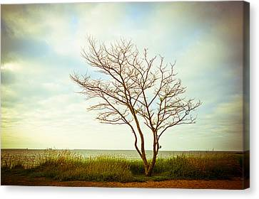 A Place Of My Own Canvas Print by Andria Patino