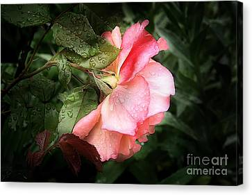 A Rose Is A Rose Canvas Print by VIAINA Visual Artist