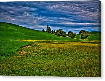 A Sliver Of Canola Canvas Print by David Patterson