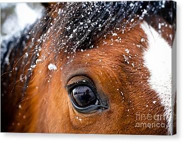 A Snowy Eye Canvas Print by Leaetta Mitchell