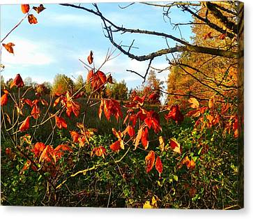 A Splash Of Red II Canvas Print by Julie Dant