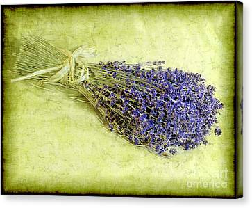 A Spray Of Lavender Canvas Print by Judi Bagwell