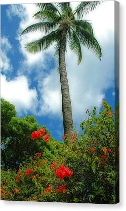 A Touch Of The Tropics Canvas Print by Lynn Bauer