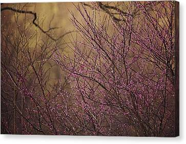 A View Of A Dew-covered Bush In Bloom Canvas Print by Joel Sartore