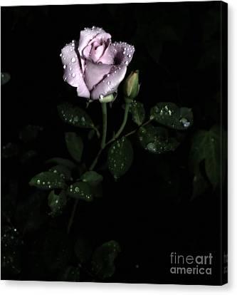 A Vintage Rose Canvas Print by Eva Thomas