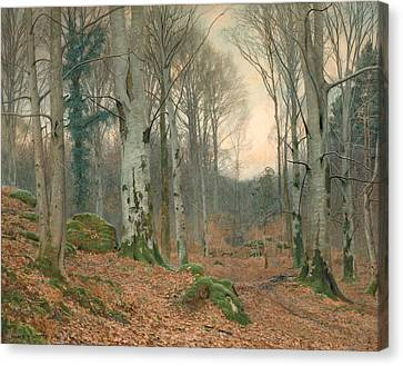 A Welsh Wood In Winter Canvas Print by JT Watts