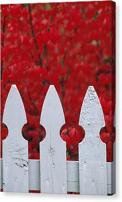 A White Picket Fence Against Red Autumn Canvas Print by Lynn Johnson