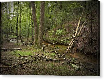 A Woodland Scene In Cades Cove No.471 Canvas Print by Randall Nyhof