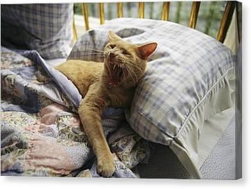 A Yawning Cat Wakes From A Nap Canvas Print by Sisse Brimberg