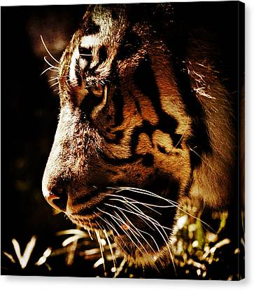 Absolute Focus Canvas Print by Andrew Paranavitana