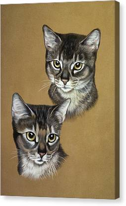 Abyssinian Cats Canvas Print by Patricia Ivy