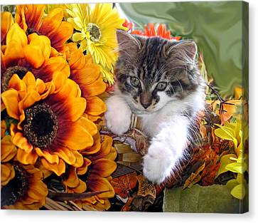 Adorable Baby Animal - Cute Furry Kitten In Yellow Flower Basket Looking Down - Kitty Cat Portrait Canvas Print by Chantal PhotoPix