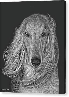 Afghan Hound   Canvas Print by Larry Linton