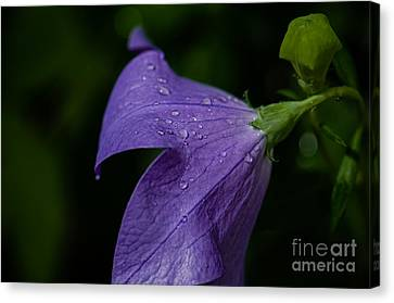 After The Rain Canvas Print by Tim Grimmel