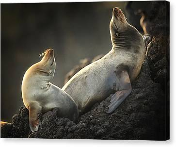 Afternoon Stretch Canvas Print by Steve Munch