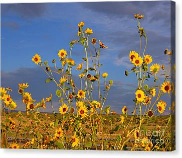 Against The Blue Sky Canvas Print by Tamera James
