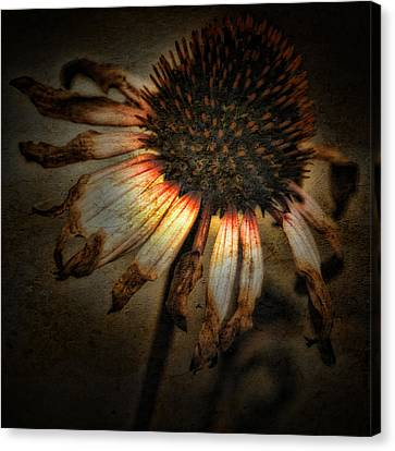 Ageless Beauty Canvas Print by Bonnie Bruno