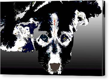 Akita Chow Canvas Print by One Rude Dawg Orcutt