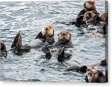 Alaskan Sea Otters Canvas Print by Josh Whalen