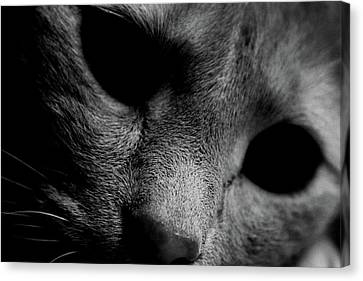 Alfie Two Canvas Print by Jerry Cordeiro