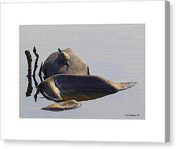 All By Myself Canvas Print by Brian Wallace