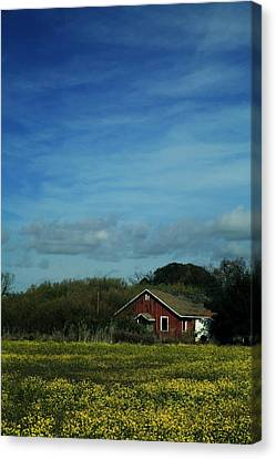 All That Yellow Canvas Print by Laurie Search