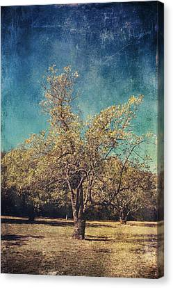 All That's Unknown Canvas Print by Laurie Search