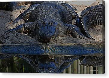 Alligator And Reflection Canvas Print by Dorothy Cunningham