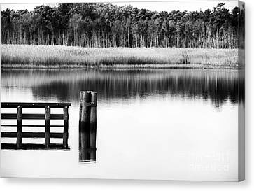 Alone In The Pine Barrens Canvas Print by John Rizzuto