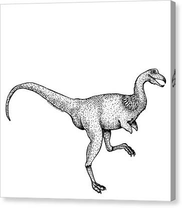Doodle Art Canvas Print featuring the drawing Alvarezsaurus - Dinosaur by Karl Addison