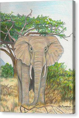Amboseli Elephant Canvas Print by C L Swanner