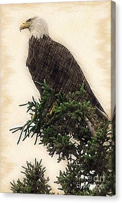 American Bald Eagle In Tree Canvas Print by Dan Friend