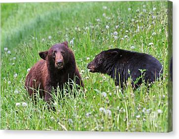 American Black Bear With Cub Canvas Print by Louise Heusinkveld